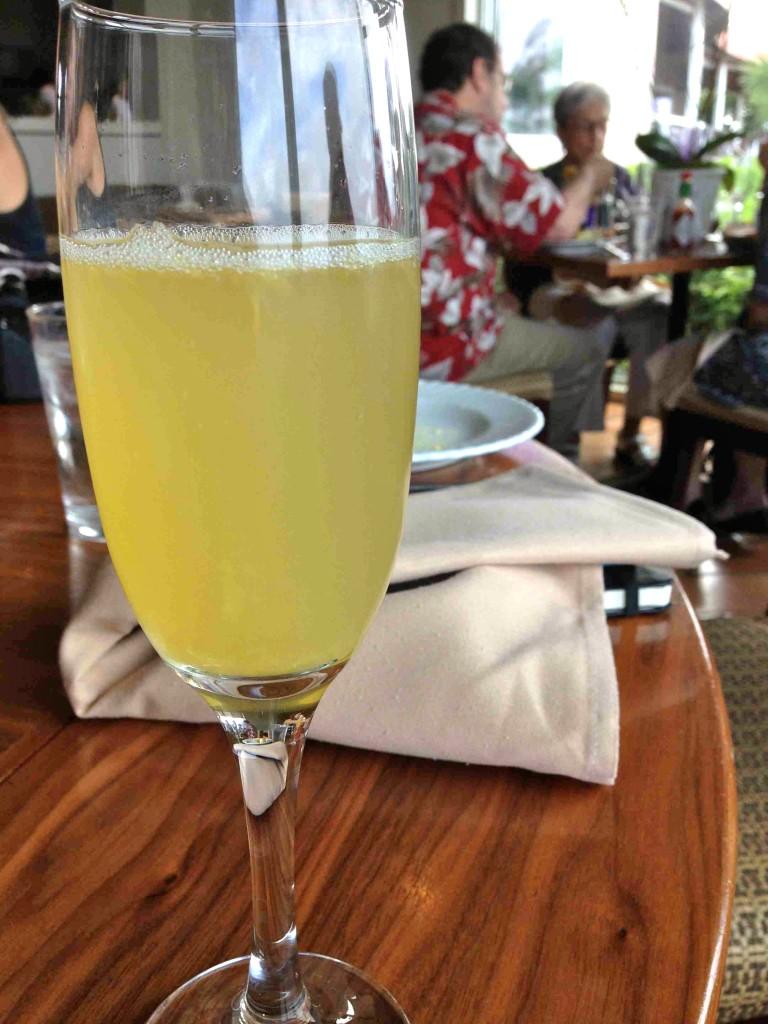 mimosa-oystercatchers